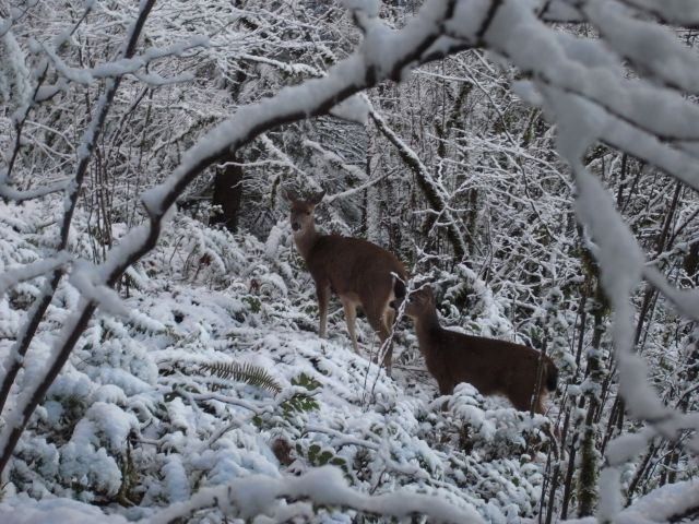 CldMtn Deer And Snow 117.99 Kb